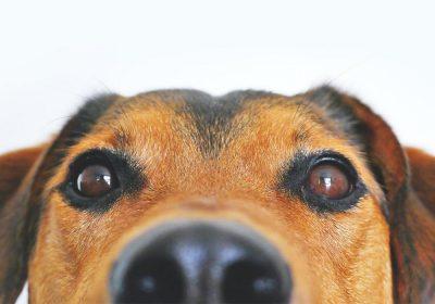 esterilização de animais domésticos, cães e gatos, no concelho de caminha